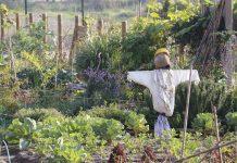 Agrofarmaci per hobbisti