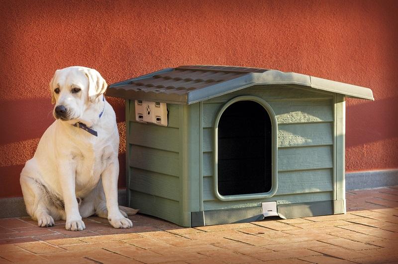 La Cuccia Per Cani Bungalow Di Bama Diventa Large Green Retail