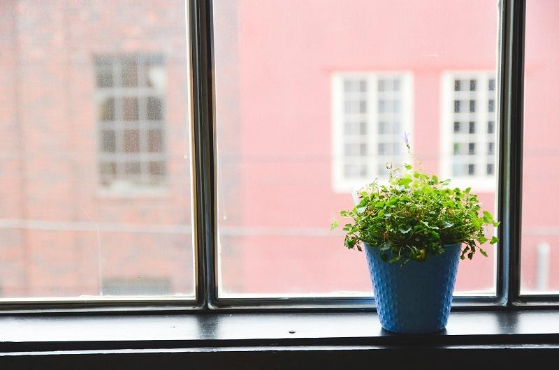 Piante Da Appartamento Vendita Milano.Piante Da Interno E Millennial Come Cambia La Vendita