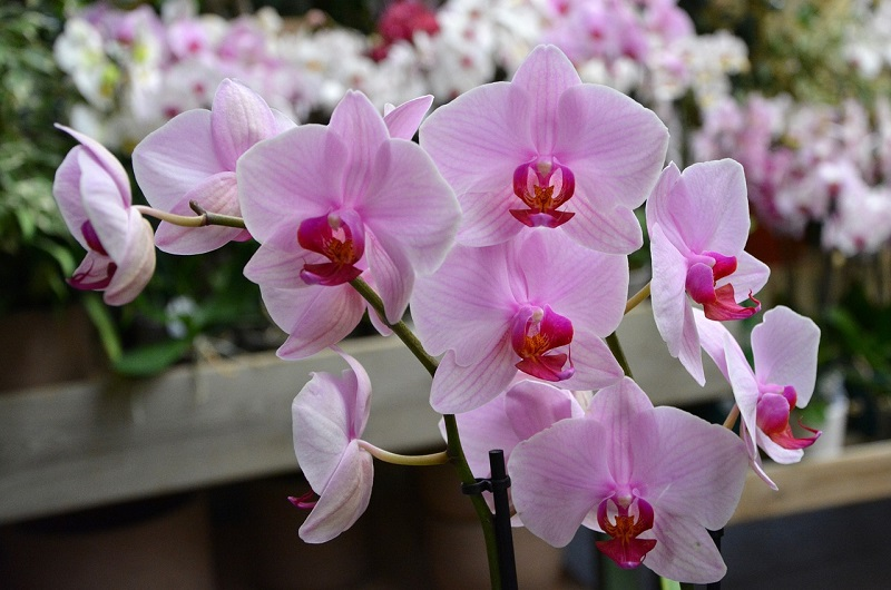 Valagro presenta il concime per orchidee for Concime per orchidee