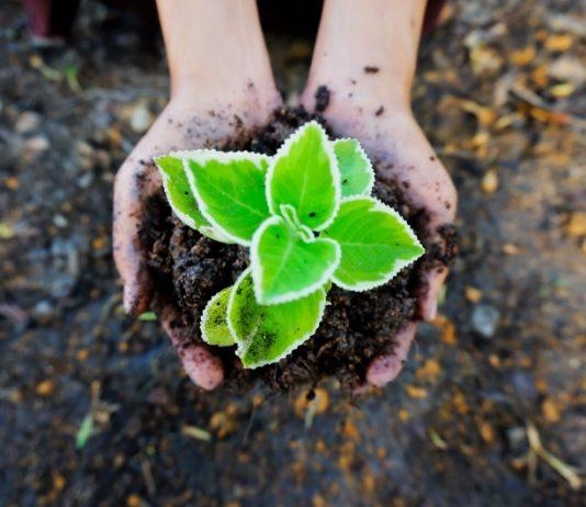 mercato dei fertilizzanti hobbistici