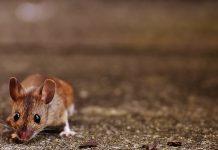 classificazione dei rodenticidi