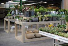 gestione finanziaria del garden center