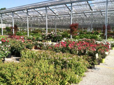 Petitti Garden Center