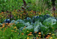 mercato dei fertilizzanti