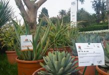 Florinfo sponsor tecnico di Euroflora