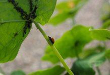 mercato della difesa delle piante