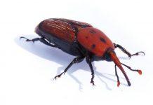 Lotta agli insetti alieni
