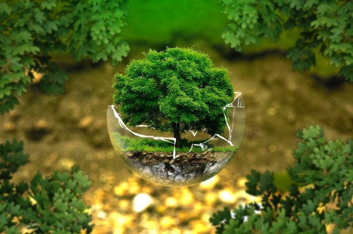 gli alberi ci salveranno dal global warming
