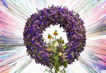 myplant and garden 2019