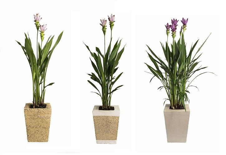 Vasi Per Piante Da Appartamento.Vasi In Canapa E Calce Funzionali E Sostenibili