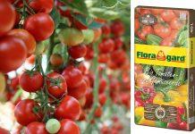 Terriccio Biologico per pomodori