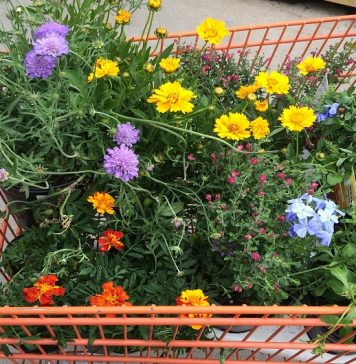 legge per i garden center