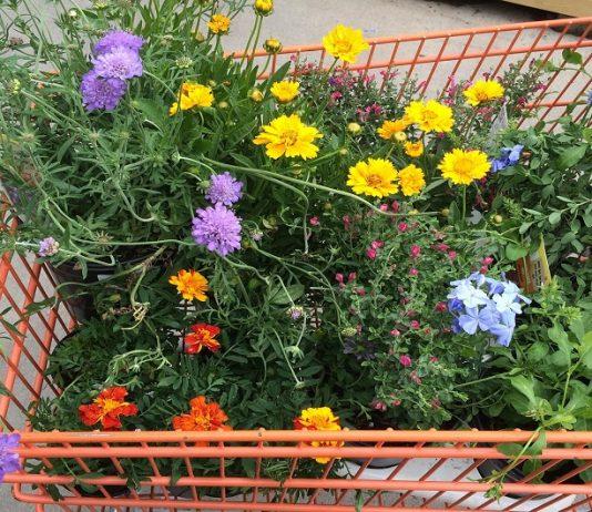 legge per i garden center