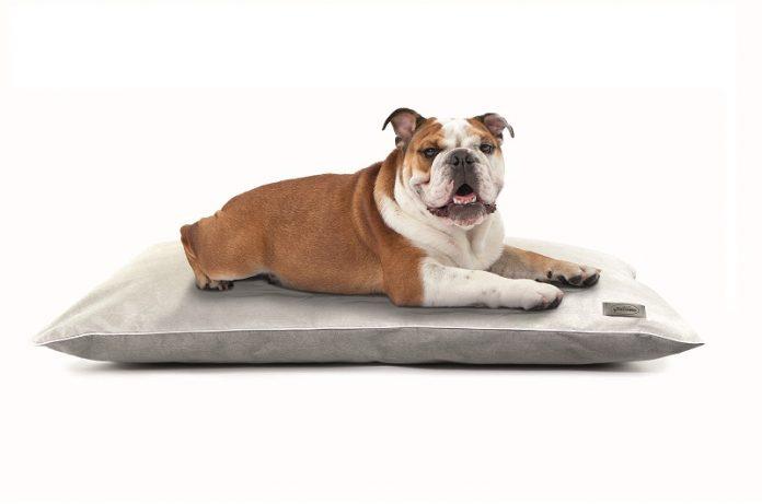 cuscino antibatterico per animali