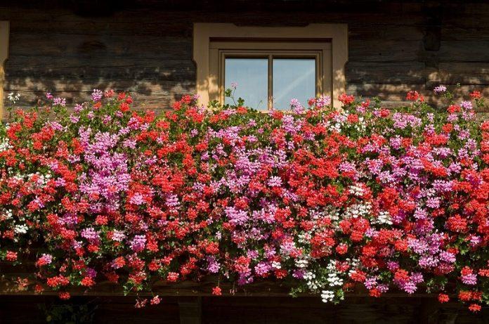 terriccio attivo per piante da balcone