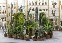 mercato del giardinaggio