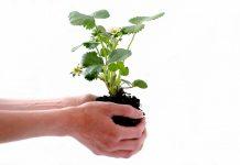 Agrofarmaci a uso non professionale