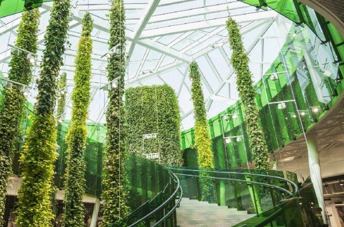 piante contro gli inquinanti indoor