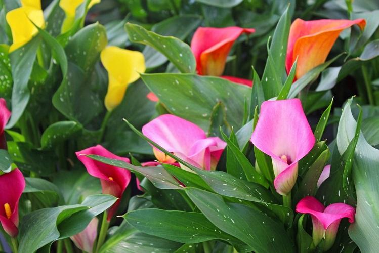 Bovo Garden