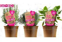 piante aromatiche biologiche