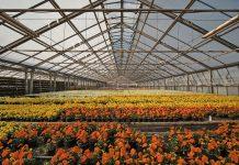 Assofloro ha riunito gli imprenditori del comparto floricolo