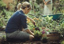 ricerca di mercato sul giardinaggio