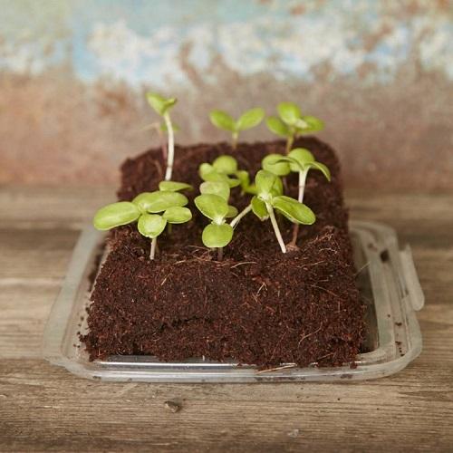 Soluzioni-originali-per-il-giardino-growbar