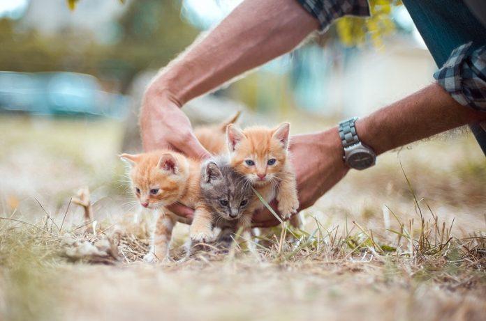 Pet food e sostenibilità