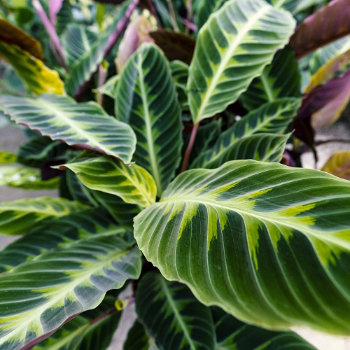piante online