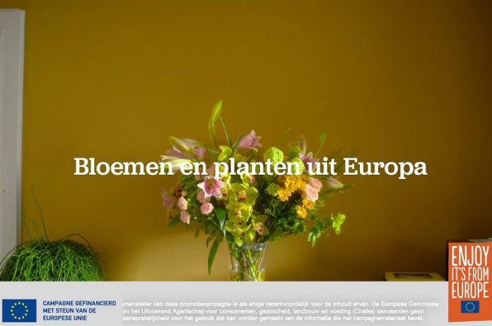 Campagna europea per promuovere il florovivaismo
